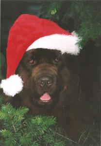 Sam kerst