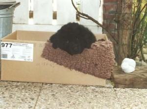 pup in doos
