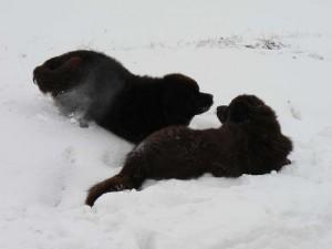 sneeuw (3)