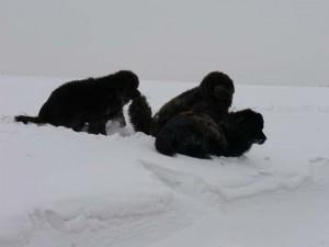 sneeuw (4)